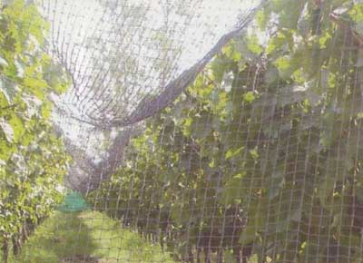 Buy Anti Bird Nets