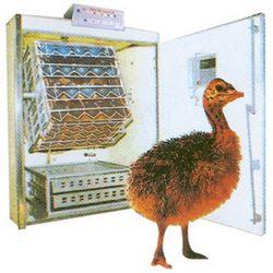 Buy Emu Incubator