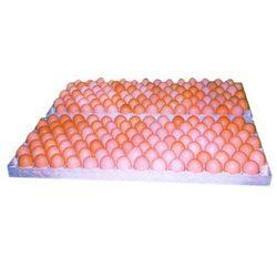 Buy Egg Setting Tray