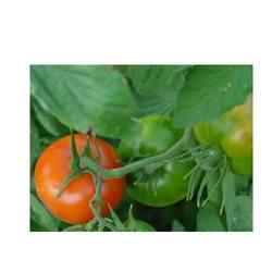 Buy Bio Pesticide