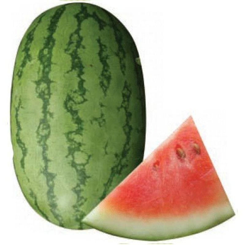 Buy Water Melon Seed