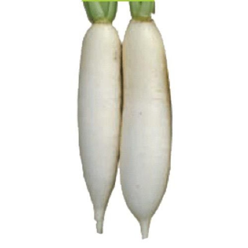 Buy Radish Seed