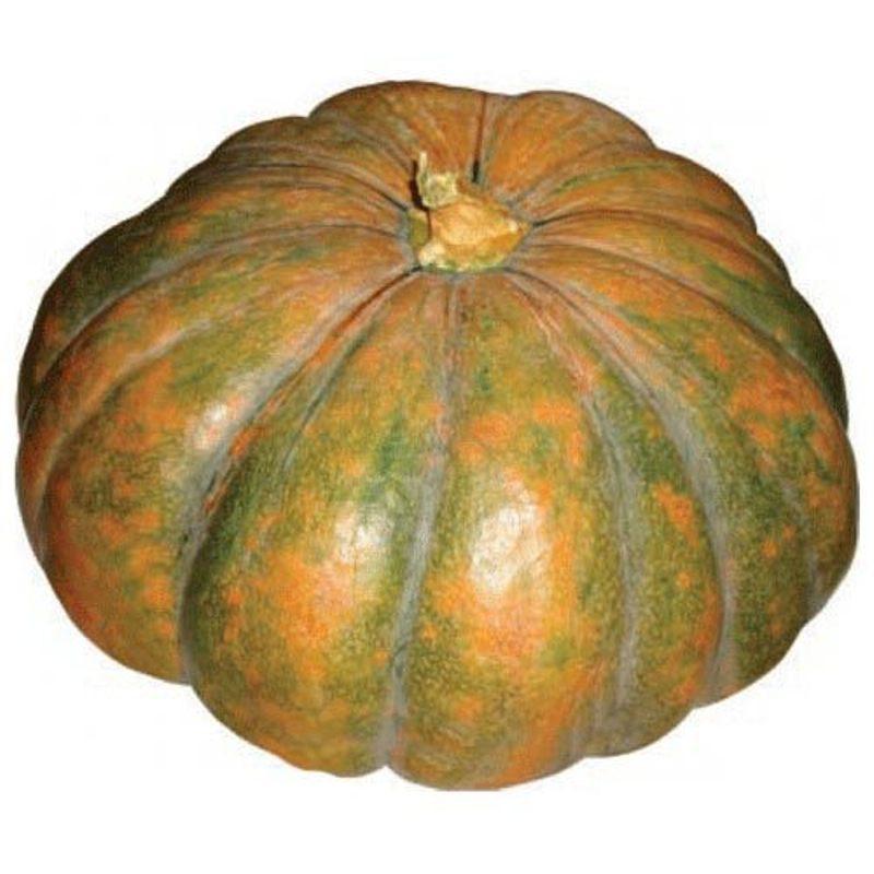 Buy Pumpkin Seed