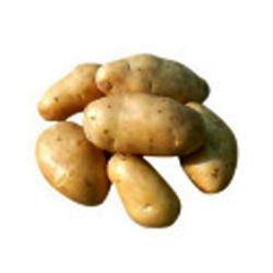 Buy Pukhraj Potato