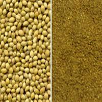 Coriander (Dhania Powder) Spices