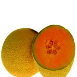 Buy Musk melon seeds