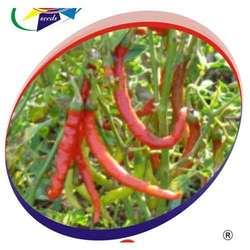 Buy Chilli D- 27 Seeds