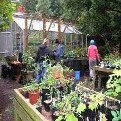 Buy Plant Nursery