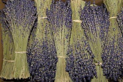 Buy Dried lavender flowers
