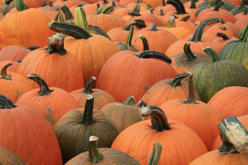 Buy Red Pumpkin
