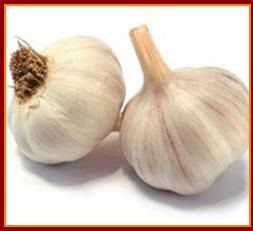 Buy Raw Garlic