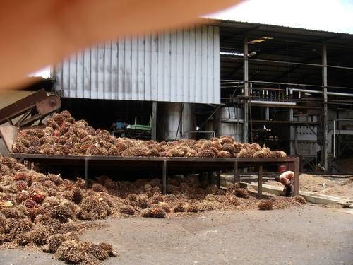 Buy Supervision Of Erection & Commissioning Of Palm Oil Processing Plant
