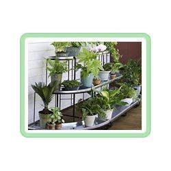 buy plant stands