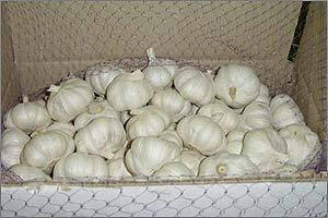 Buy Garlic