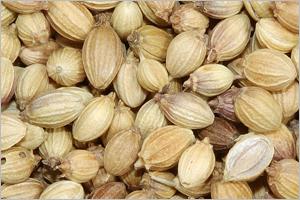Buy Coriander seed