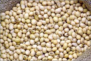 Buy Soya bean