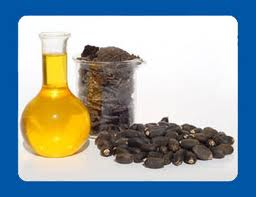 Buy Jatropha Seed Oil