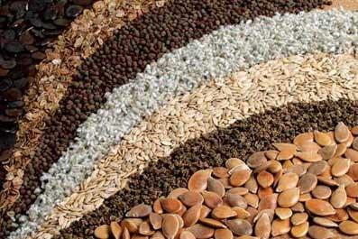 Buy Crops seeds