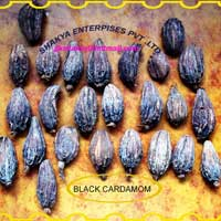 Buy Black Cardamom