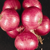 Buy Onion