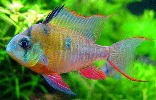 Fresh Water Fishes Buy Fresh Water Fishes Price Photo