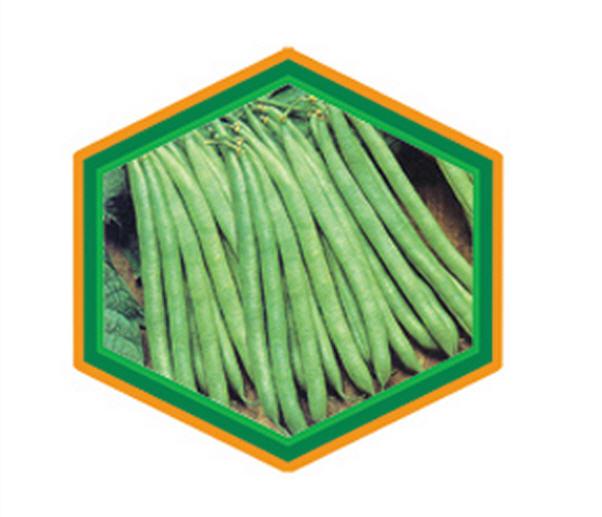 Buy Green Beanse Seeds