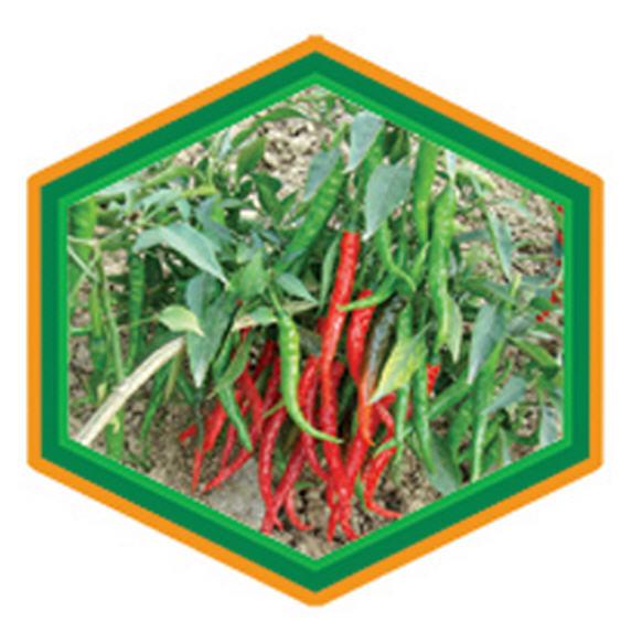 Buy Chilli Seeds