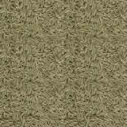 Buy Cumin Seeds