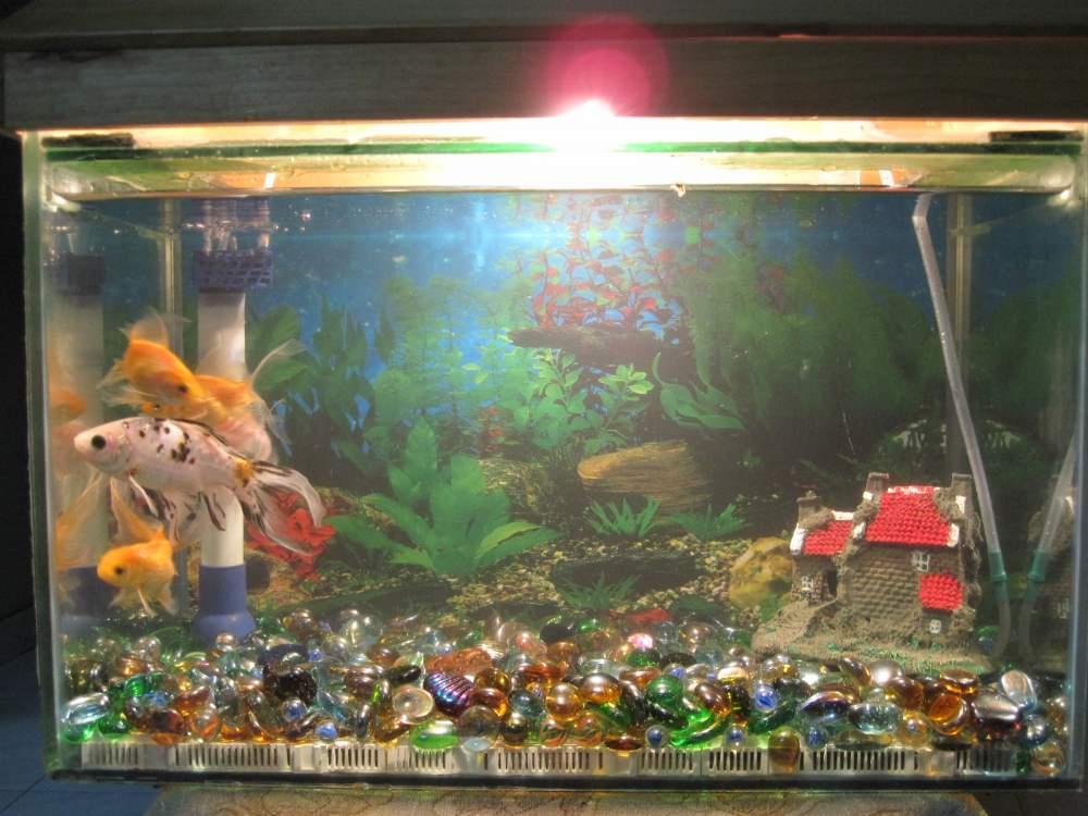 Fish Tanks Buy In Mumbai