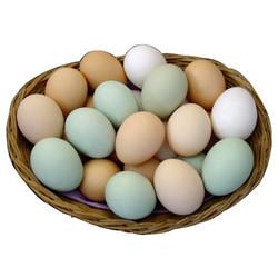 Buy Table Egg