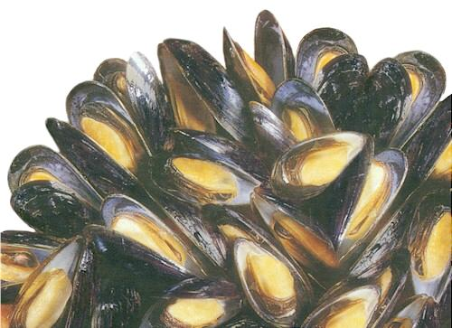 Buy Mussels