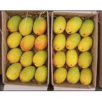 Buy Alphonso Mango