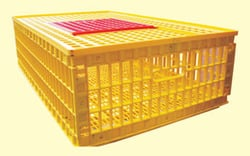 Buy Bird Transportation Cages