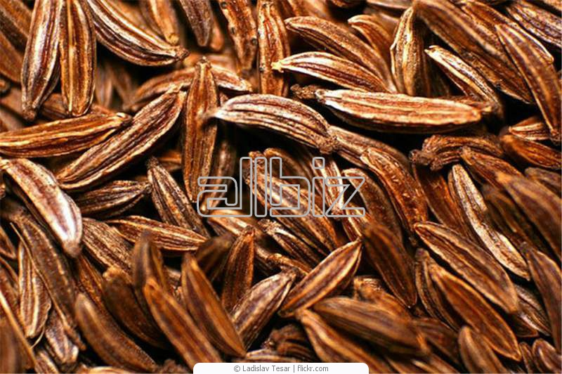Buy Cumin Seeds