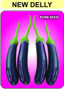 Buy Hybrid Brinjal Seed (new Delly)