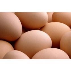 Buy Hatching Eggs
