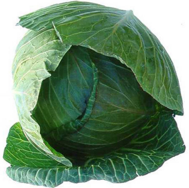 Buy Fresh Green Cabbage