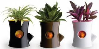 Buy Decorative Planters