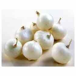 Buy White Onions