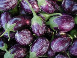 Buy Brinjal Seed