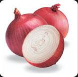 Buy Onion - Maruthi