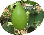 Buy Vegetable Crops(Dhara)