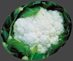 Buy Vegetable Crops (Cauliflower)