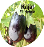 Buy Vegetable Crops(Brinjal)