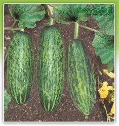 Buy Premium Products-Cucumber Light Green