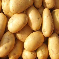Buy Fresh Potato