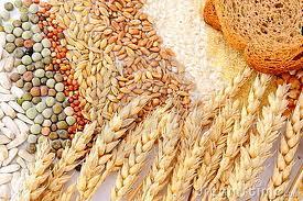 Buy Cereals Seeds