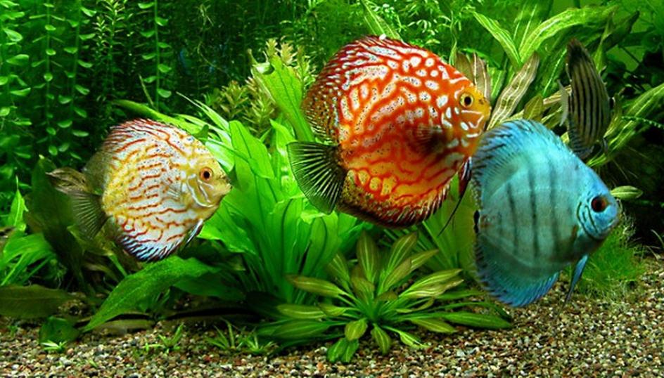 Aquarium Fish Food Buy In Gandhinagar
