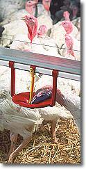 Buy Floor-Watering System For Turkeys