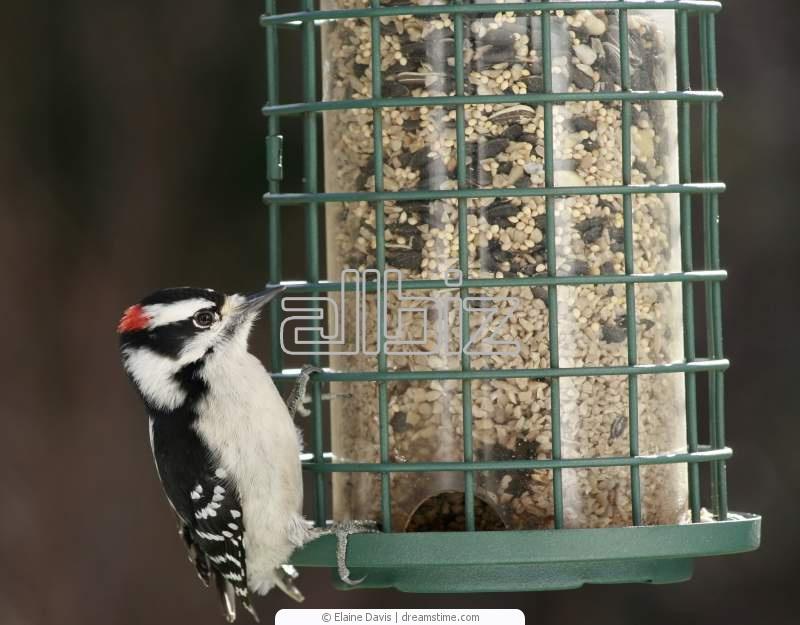 Buy Metal Bird Feeders